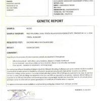 mexgeneticreport-724x1024