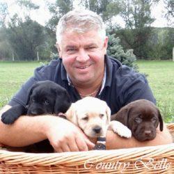 Countrybelle labrador retriever kiskutyák