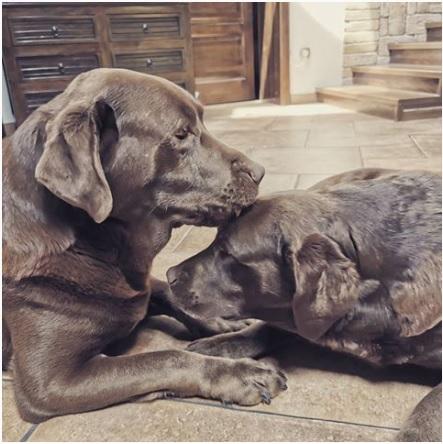 Bruce és Ashley Countrybelle Kennel